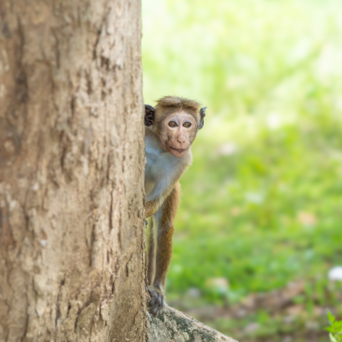 Sri Lanka's wildlife experience