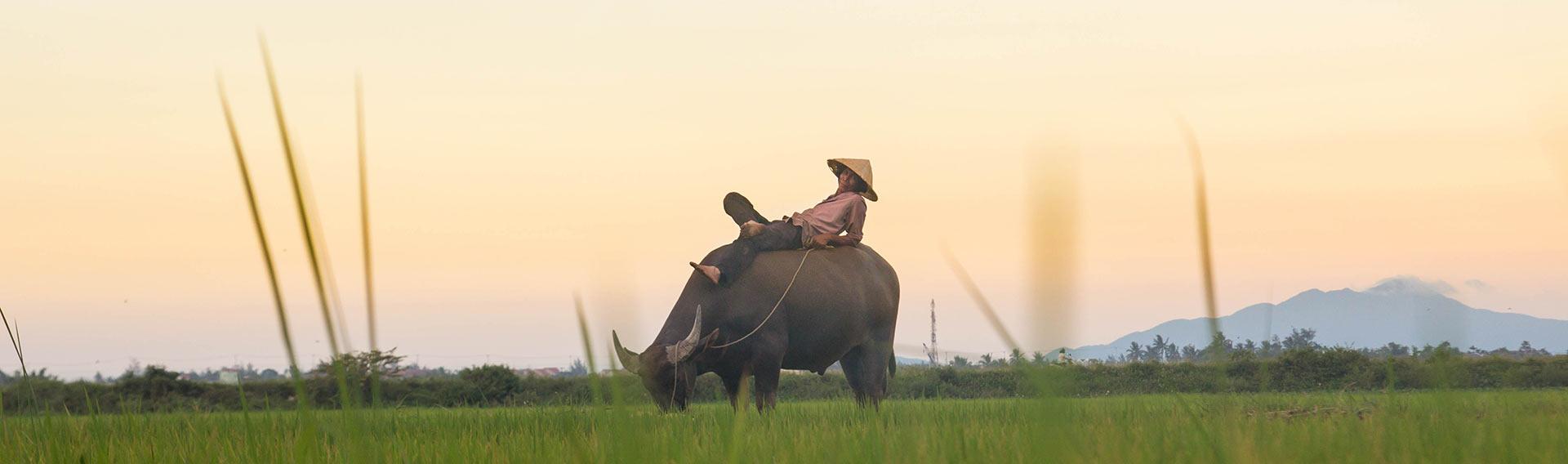 Vietnam, green landscapes