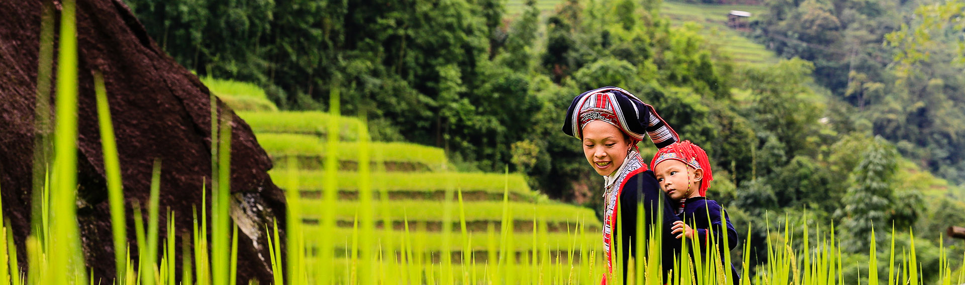 Vietnam, woman, Rice terraces