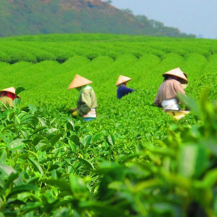Moc Chau, Vietnam