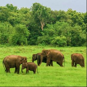 Safari Udawalawe Sri Lanka