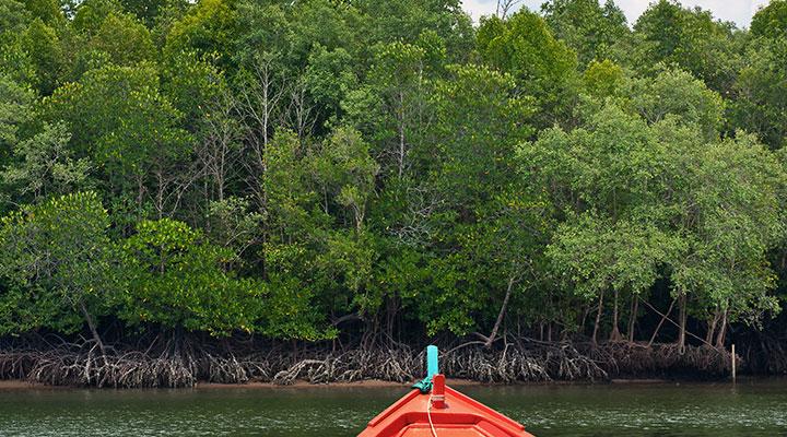 Boat ride & Yoga