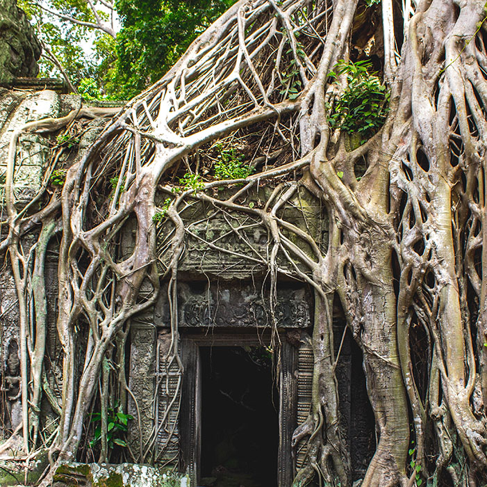 Ta Phrom, Angkor Temples, Cambodia