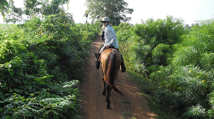 Horseback riding through tea plantations