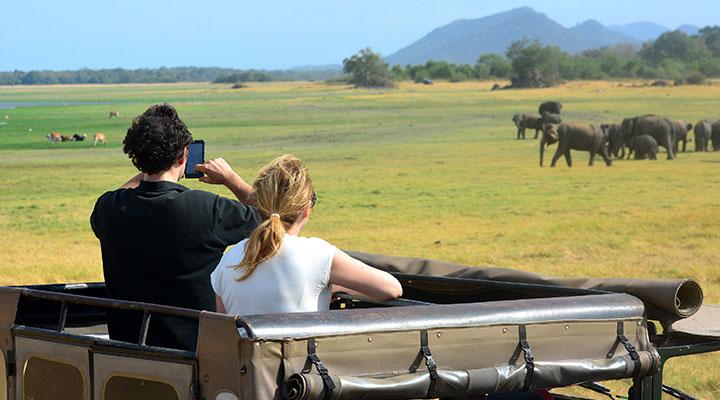 Elephant safari at the Cultural Triangle