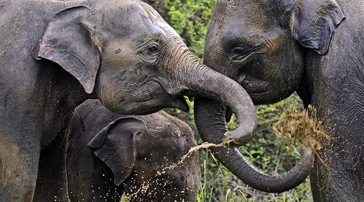 Udawalawe elephant safari