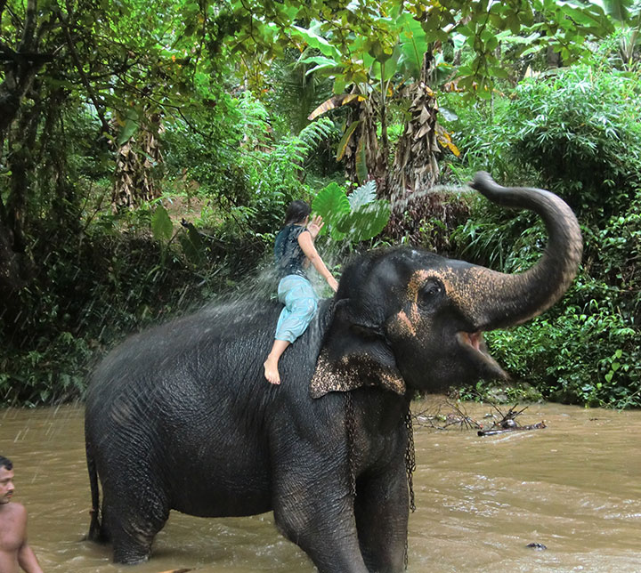 day with elephants in sri lanka
