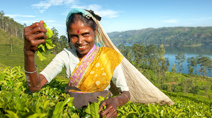 Tea plantation visit & community project
