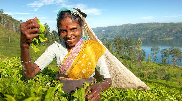 Tea factory visit & plantation walk