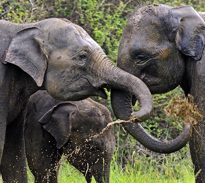elephants tour thailand