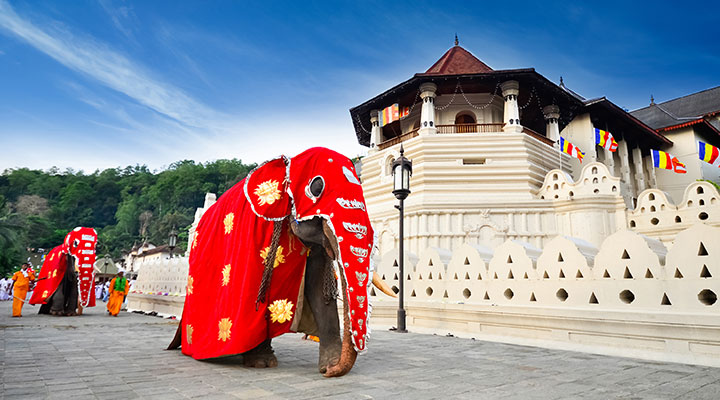 Kandy-temple-with-elephant