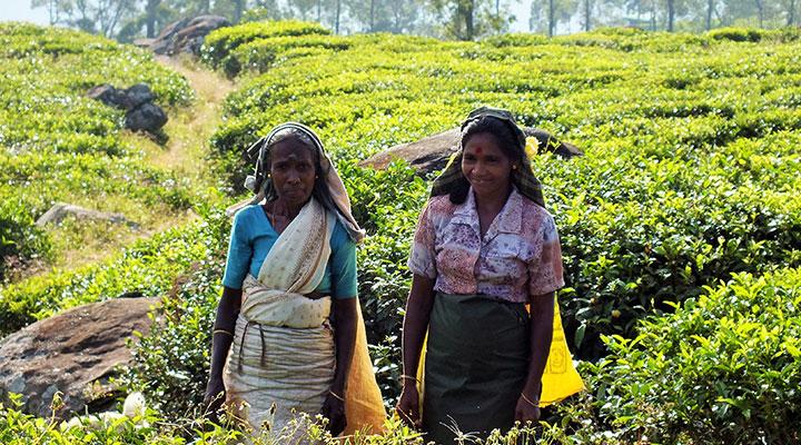 Tea plantation visit & community project