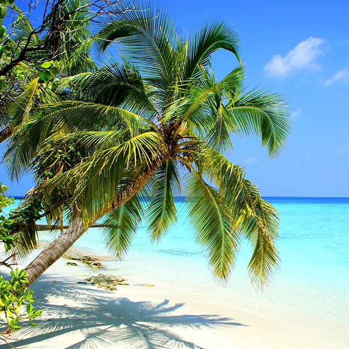 Beach , Maldives