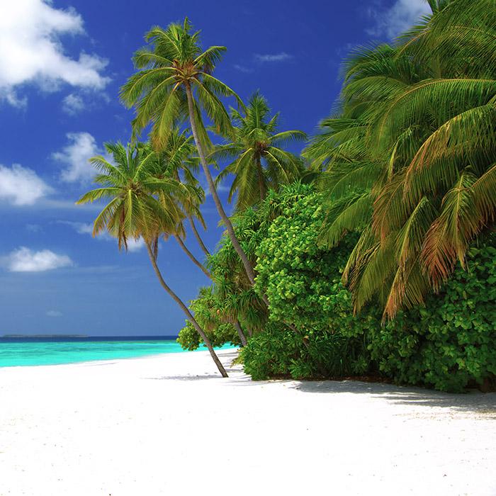 Maldives, White Sand Beach