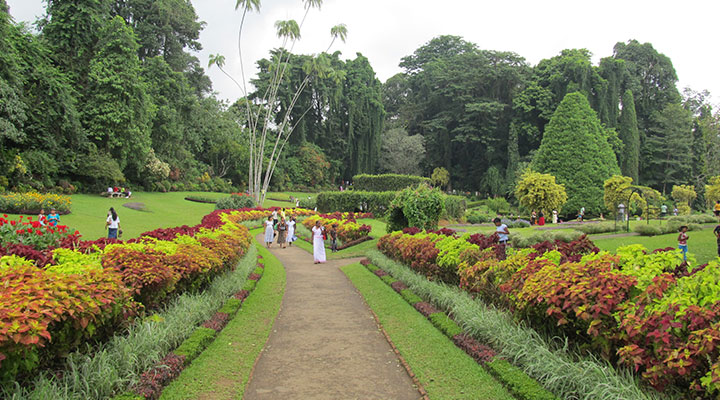 Peradeniya Botanical Gardens & Elephant Foundation