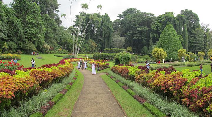Peradeniya Botanical Gardens & elephant bathing