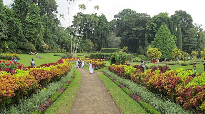 Peradeniya Botanical Gardens & bathing with elephants