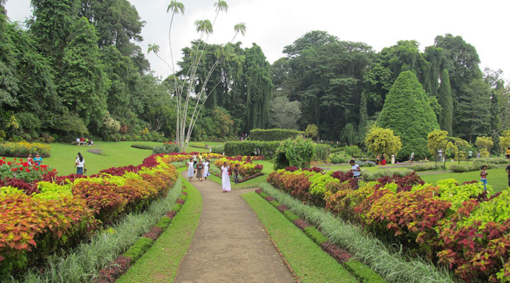 Peradeniya Botanical Garden & elephant bathing