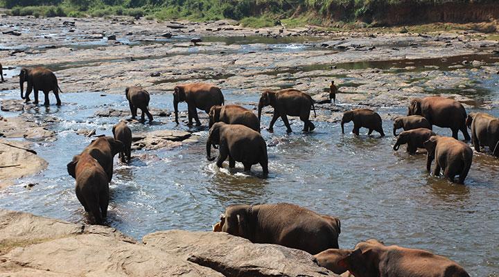 Elephant orphanage & Peradeniya Botanical Garden