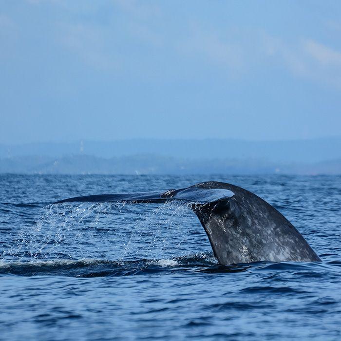 Whale, sea excursion, Sri Lanka