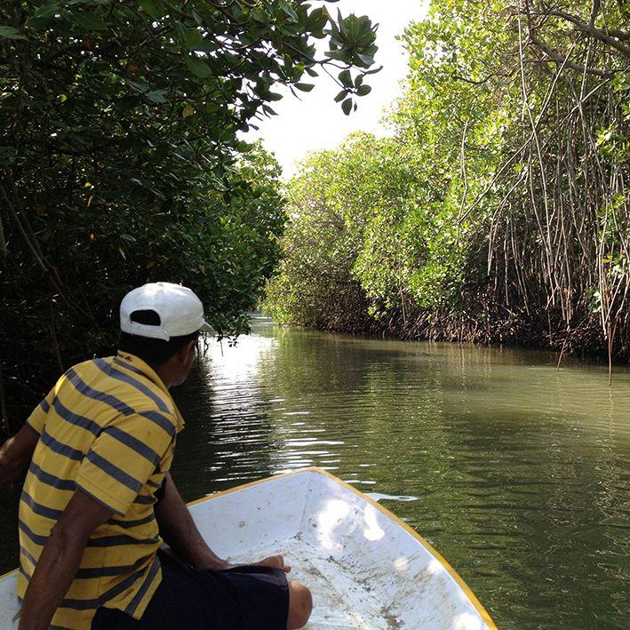 Boat, Mangroves of Bentota, Sri Lanka