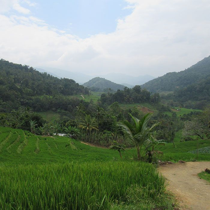 Sri Lanka, Tea estates, Landscapes
