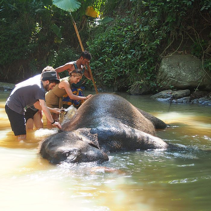 Sri Lanka, Millenium Elephant Foundation