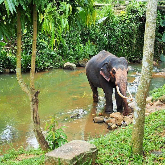 Millenium Elephant foundation, Sri Lanka