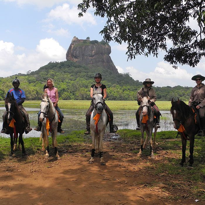 Horses, Sigiriya, Sri Lanka