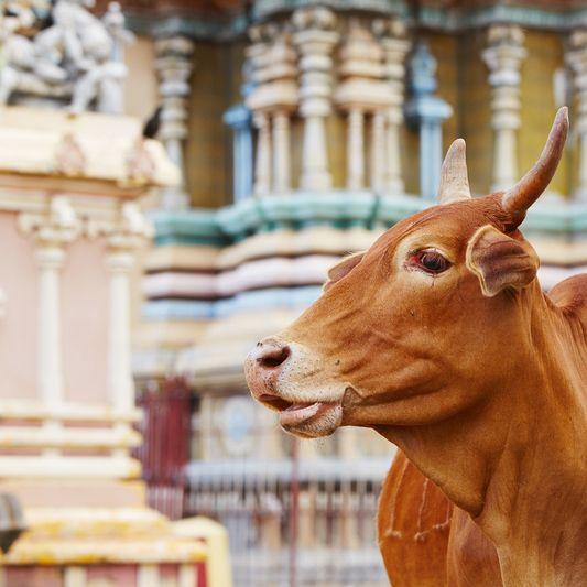 Jaffna, Temple, Sri Lanka