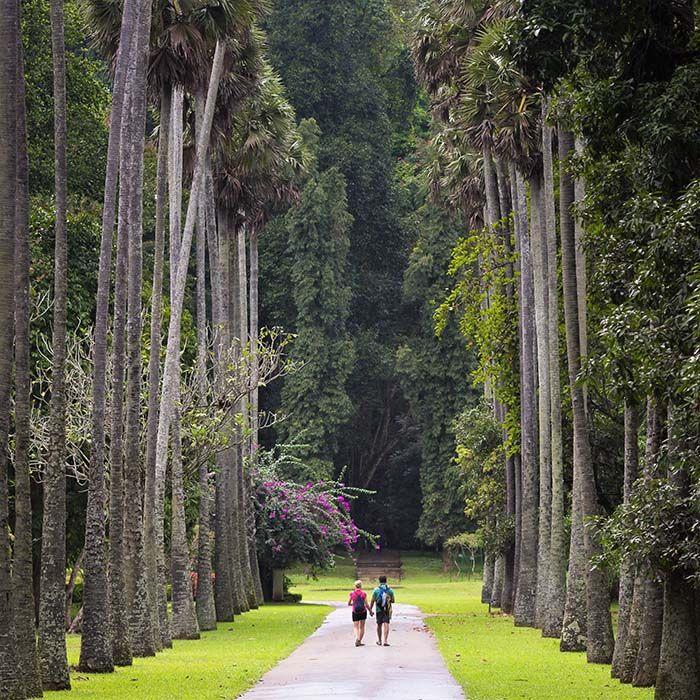 Sri Lanka, garden, peradeniya, kandy