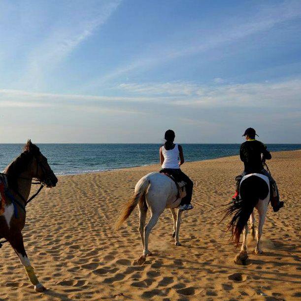 Horses, beach, Kalpitiya, Sri Lanka