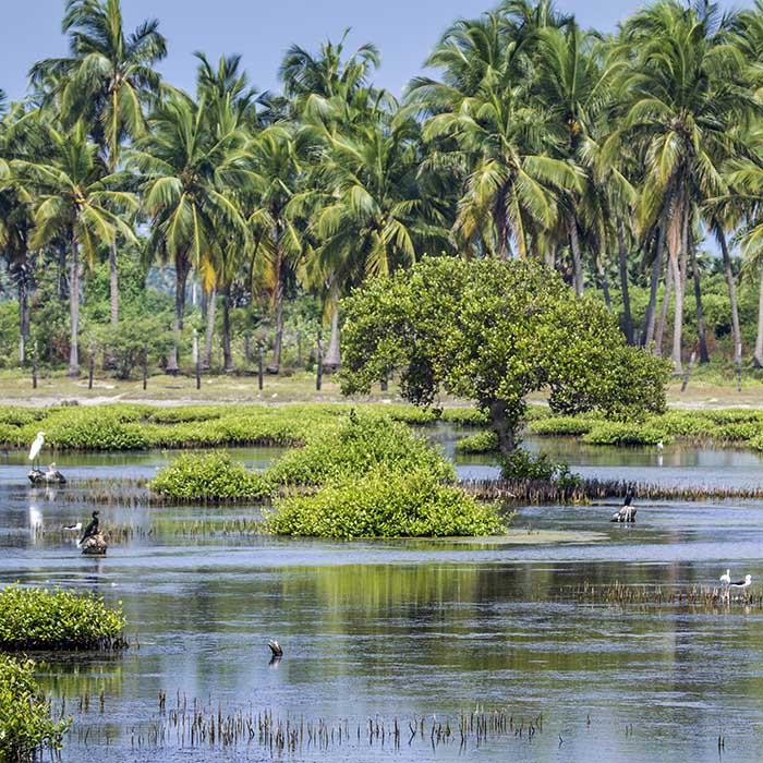 Lagoon, Kalpitiya, Sri Lanka