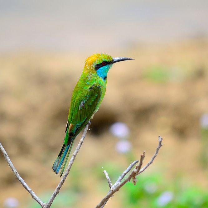 Safari, Wilpattu, Sri Lanka