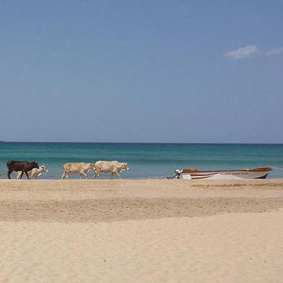 Beach, Kalkudah, Sri Lanka
