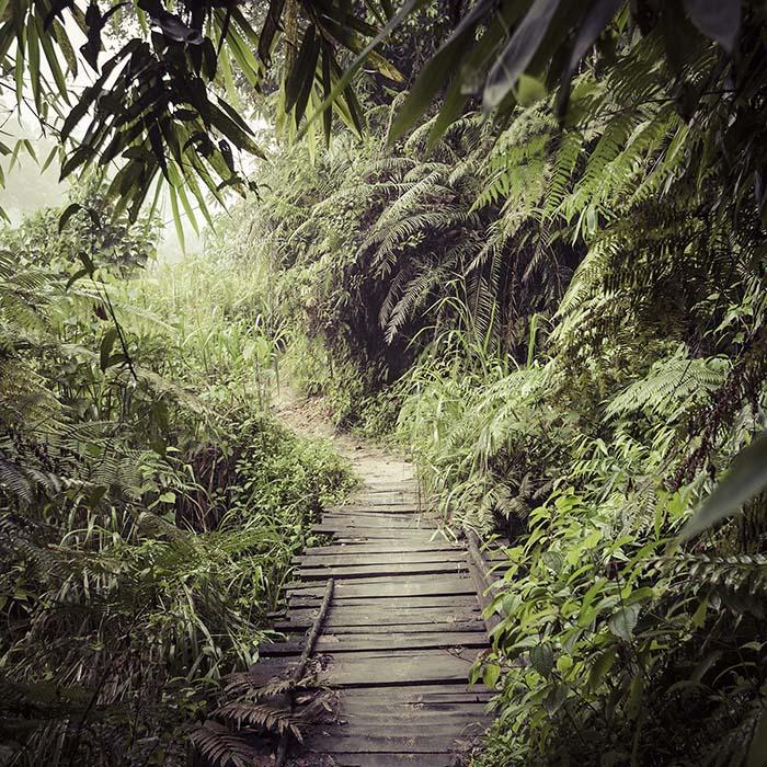 Hiking, Sinharaja Forest, Sri Lanka
