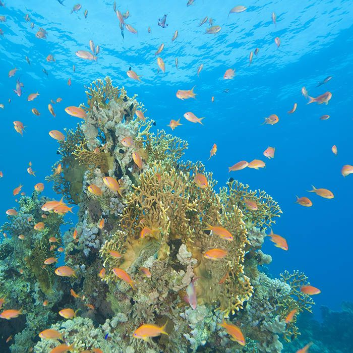 sri-lanka-snorkeling-trincomalee