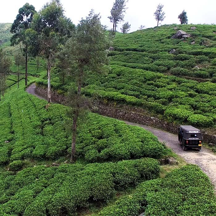 Safari, tuk-tuk, Lipton Seat, Sri Lanka