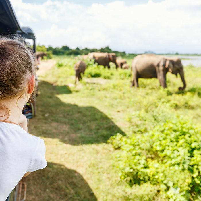 Sri Lanka, Udawalawe, Safari, Elephants