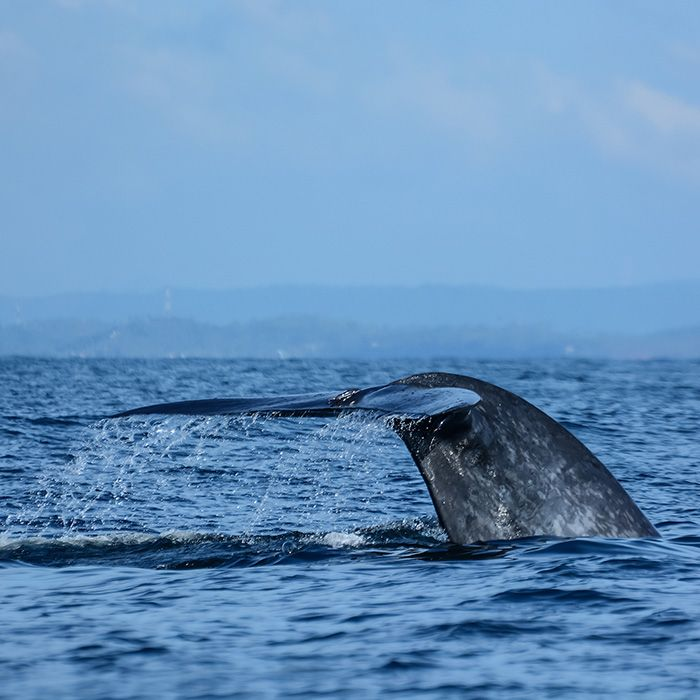 Whale, sea excursion, Sri Lanka