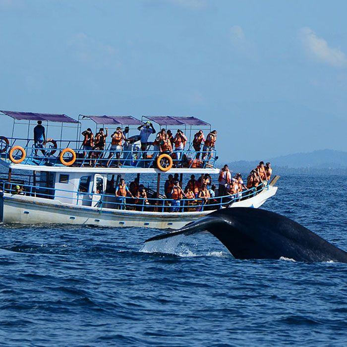 Sri Lanka, observation, whales, dolphins