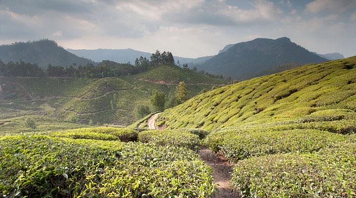 Tea Trails hike