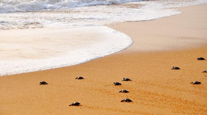 Rekawa turtle watching