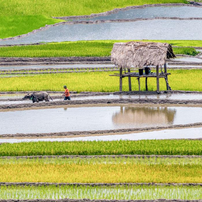 Vietnam, Pu Luong, nature reserve