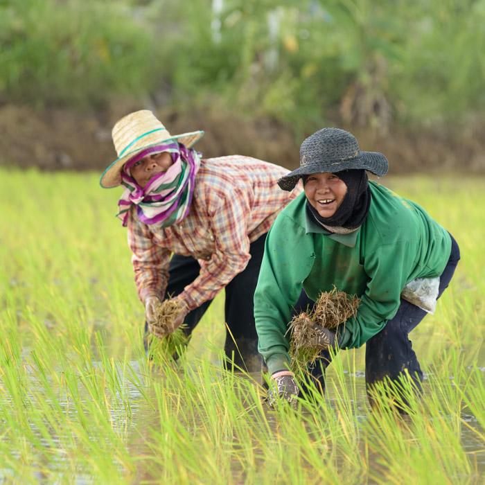 Vietnam, Pu Luong, Farmers, Fields