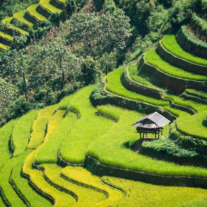 Vietnam, Sapa, Rice, Terrasses
