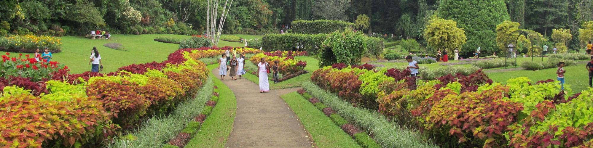 Group tours to Sri Lanka february