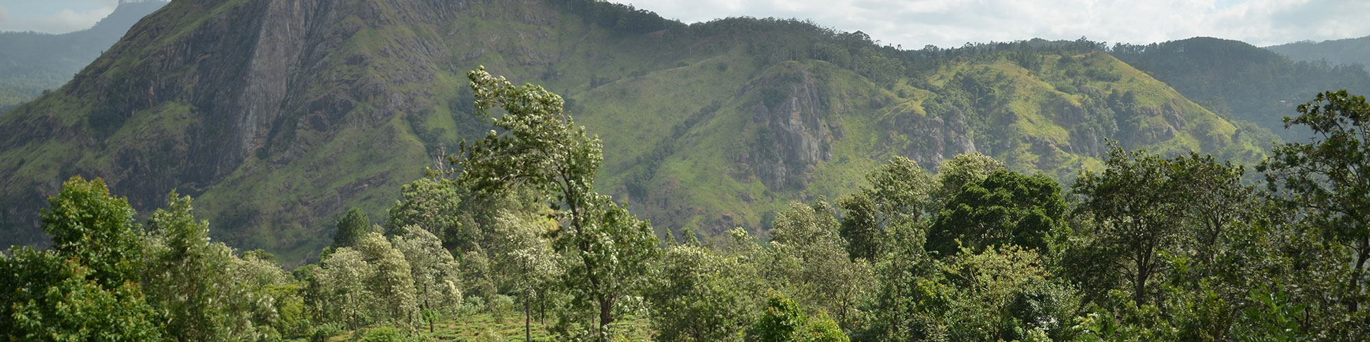 Forest hiking in Sri Lanka
