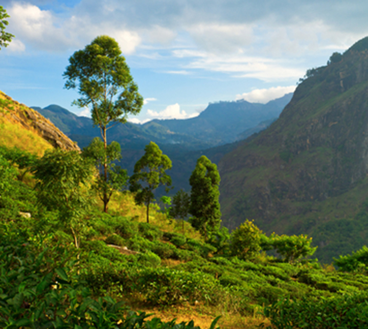 Central Sri Lanka, a lush nature