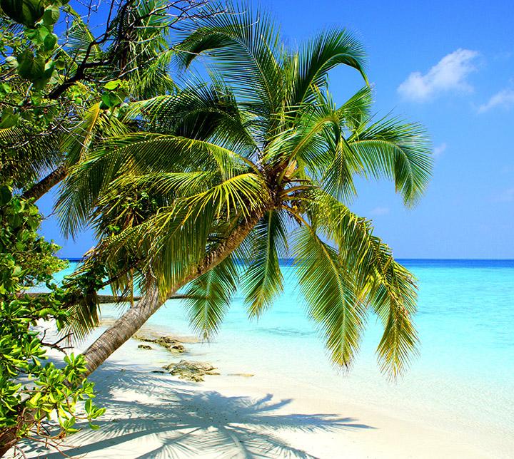 Tour, Maldives, Beach, Relaxation